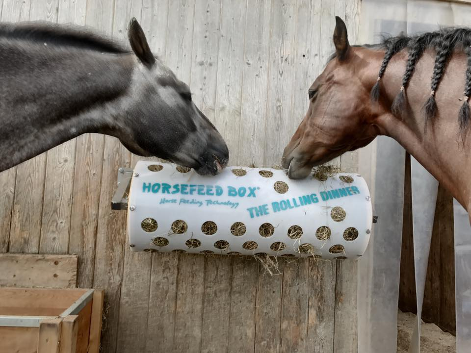 HORSEFEED BOX® The Rolling Dinner - Modell 40