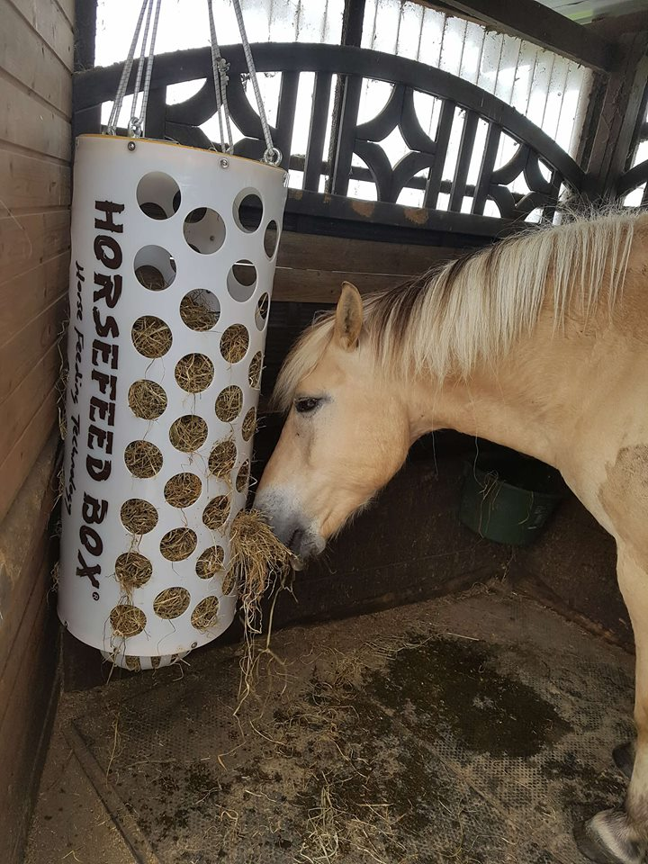 HORSEFEED BOX® HAY - DeLuxe FunDome