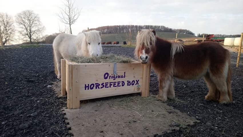 HORSEFEED BOX CLASSIC MINI SHETTY Little Longer - Modell 2019