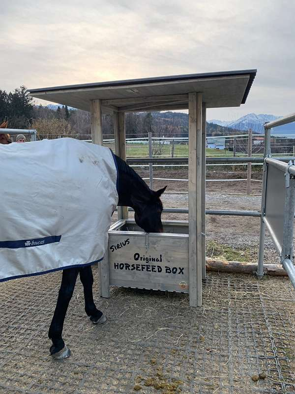HORSEFEED BOX® GOLD LARCH FODDER & ROOF EXTRA D.E.E.P - 2019
