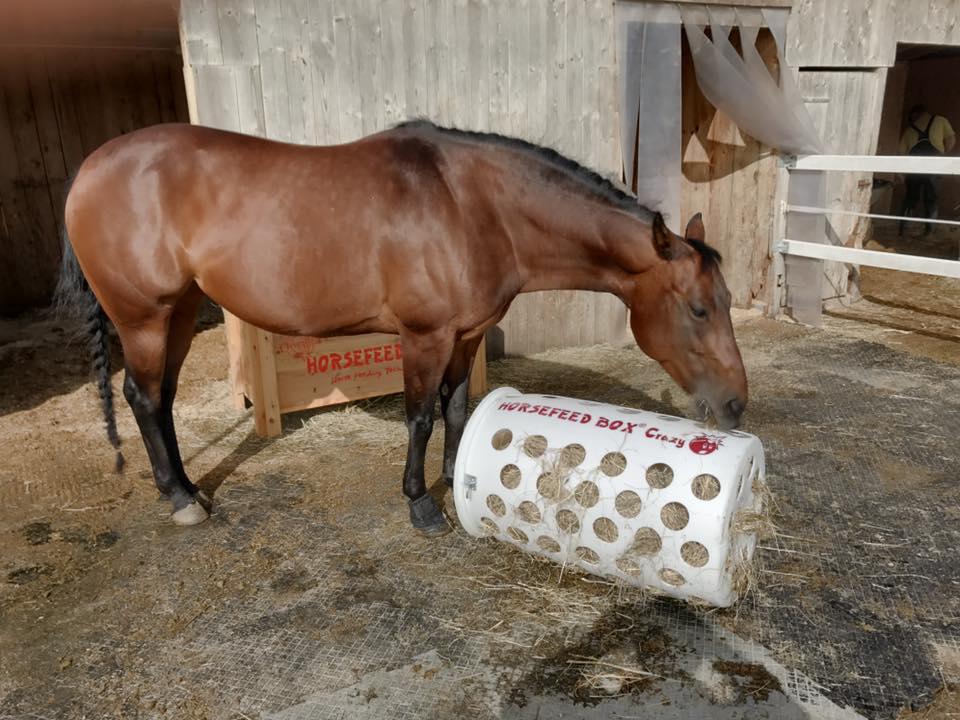 pferde fressen ihr heu nicht